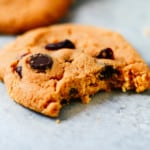 A single cranberry chocolate chip cookies with a bite taken out of it.